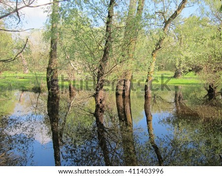 Flooded trees in the green meadow over the banks of the Danube river in early spring