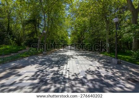 flooring walk among large trees - stock photo