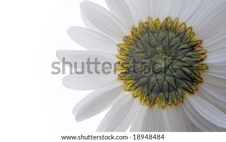 flora against white background