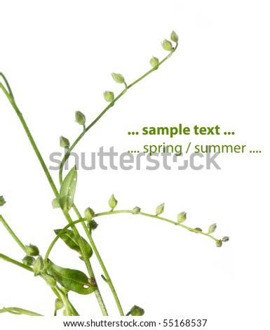 flora against white background - stock photo