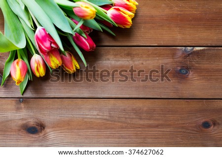flora, gardening and plant concept - close up of tulip flowers on wooden table - stock photo