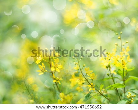 Floral abstract background.Blurred flower soft style with vintage filter effect.