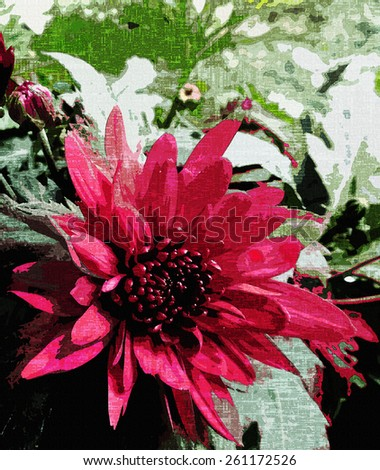 Floral aged card with red chrysanthemum on grunge stained textured background - stock photo