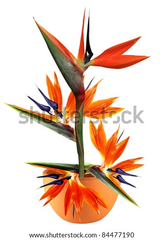 floral arrangement of flower in a clay pot on a white background - stock photo