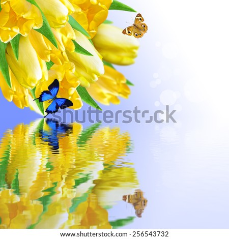 Floral background and a bouquet of tulips, with reflection in water - stock photo
