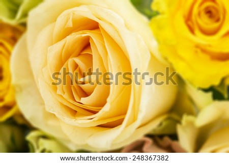 Floral background of fresh yellow roses with focus to a large central rose in a fragrant bouquet symbolising love, full frame close up detail of the petals - stock photo