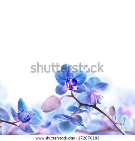 Floral background of tropical orchids - stock photo