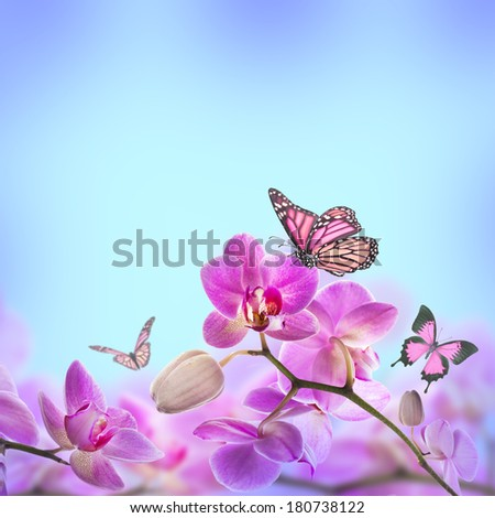 Floral background of tropical orchids and  butterfly - stock photo