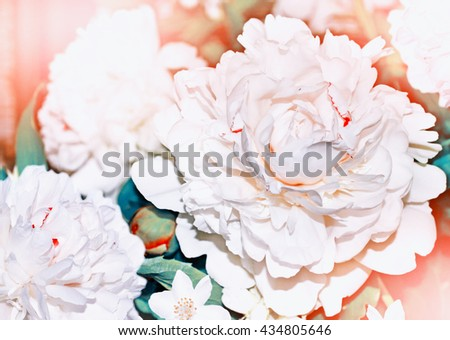 Floral background. Spring landscape. Beautiful blooming spring flowers peonies. - stock photo