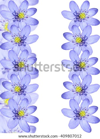 Floral background. The first spring flowers. Blue snowdrop