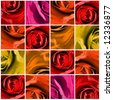 Floral background with 16 quadrangles, multi-square with close-up of roses in different beautyful colors. - stock photo