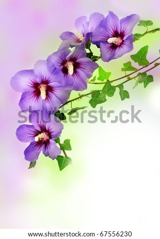 floral border from hibiscus flowers - stock photo