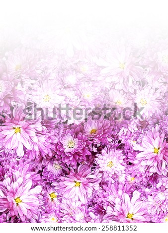 Floral border print in transparent - stock photo