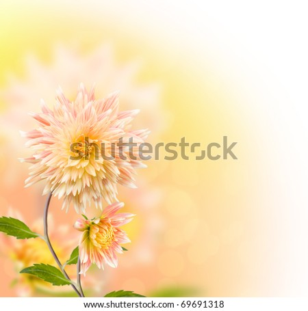 Floral border with dahlia - stock photo