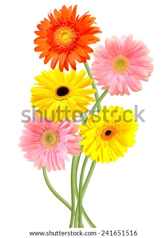 Floral branch:  colorful gerber flowers - stock photo