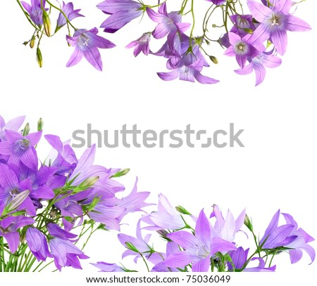 floral frame from bell flowers - stock photo