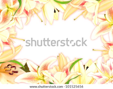 Floral frame with lily flowers and green leaf on white background. Nature art ornament template for your design. Close-up. Studio photography. - stock photo