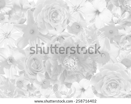 floral mourning background in black and white - stock photo