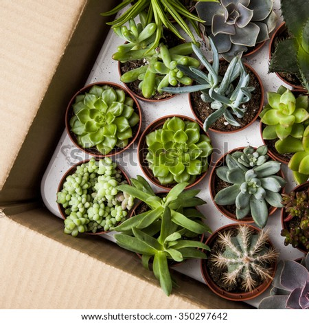 Floral pattern. Succulents and cactus in a paper box - stock photo