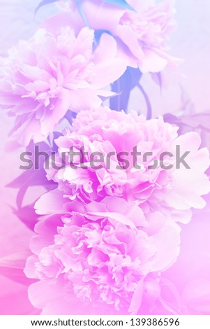 Floral peony background - stock photo