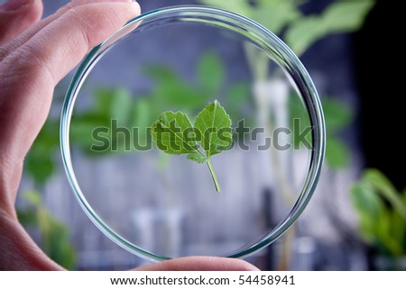 Floral science in blue laboratory - stock photo