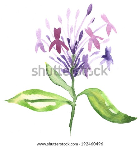 Floral watercolor painting - stock photo
