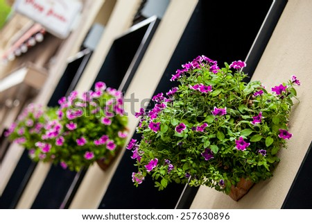 Floralpots hanging on a building's wall - stock photo