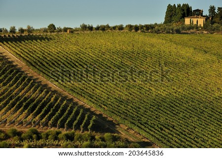 FLORENCE, ITALY,  - October. 16. 2009: aerial view of Vineyard, Chianti in Central Tuscany, famous wine making region in Italy - stock photo