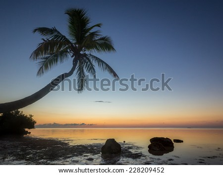 Florida Coconut palm at sunset - stock photo