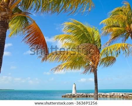 Florida Keys, beautiful summer scene with blue ocean water, nature and palm trees on a sunny day
