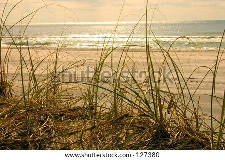 Florida Paradise - Golden Light - Romantic Scene (exclusive at shutterstock) - stock photo