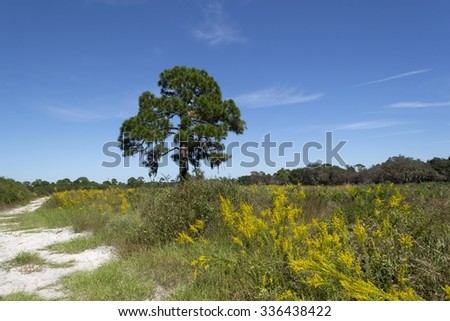 Florida shrub pine forest landscape in Oscar Sherer National Park - stock photo
