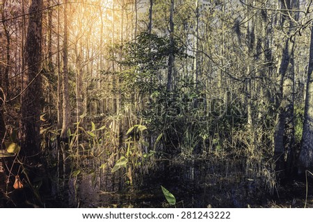 Florida tropical forest swamp with light leak - stock photo