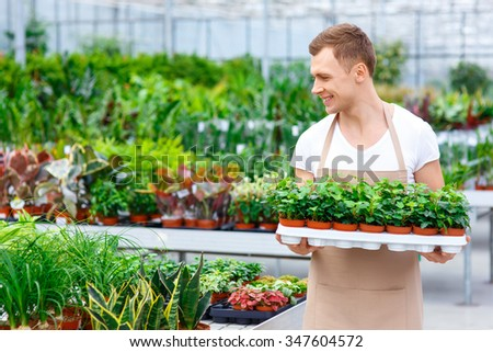 Florist at work. Handsome smiling professional is carrying multiple small flowerpots containing plants.  - stock photo
