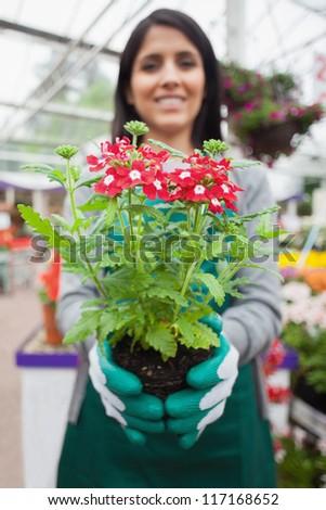 Florist planting a flower in the garden center - stock photo