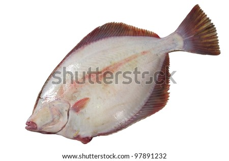 flounder's stomach on a white background