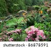 flourish vegetation at Sao Miguel Island - stock photo