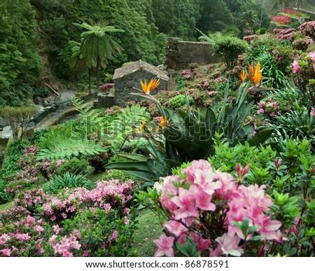flourish vegetation at Sao Miguel Island - stock photo