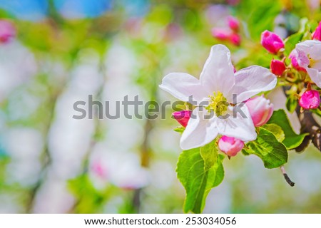 flover of apple tree on blurred background with copyspace instagram stile  - stock photo