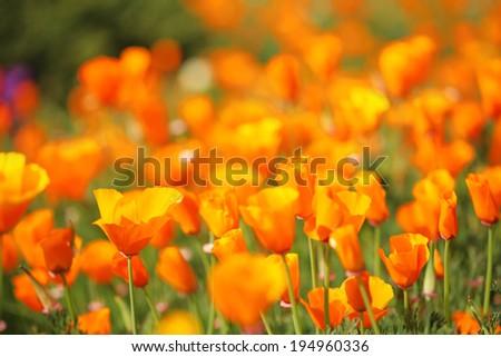 flower 10 - stock photo