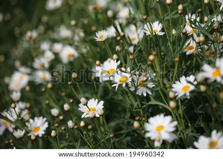 flower 7 - stock photo