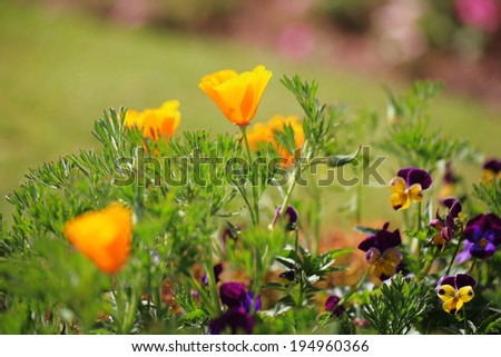 flower 16 - stock photo