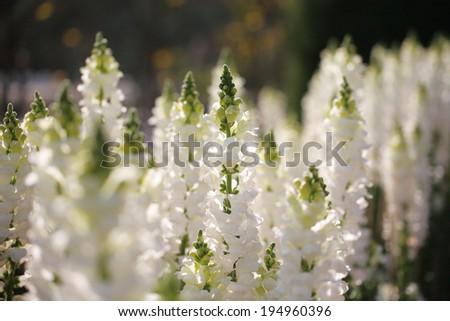 flower 2 - stock photo