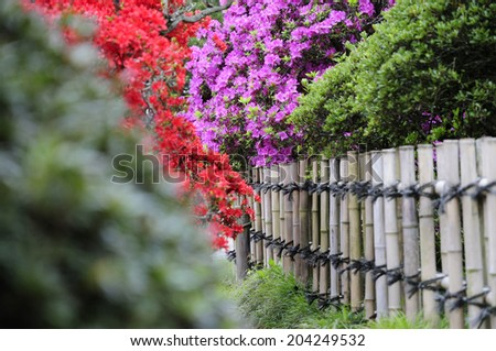 Flower And Bamboo Fence