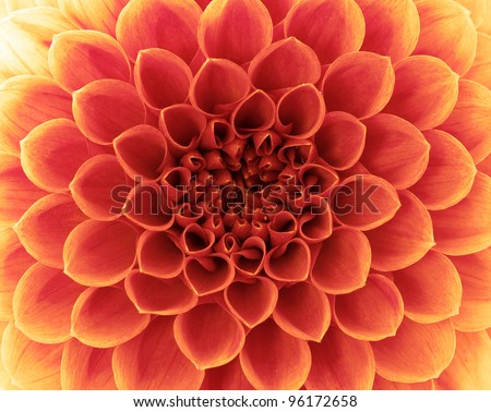 flower and beautiful petals - stock photo