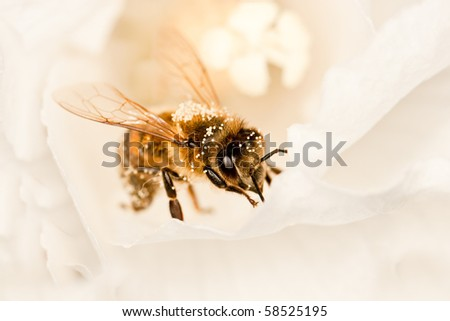 flower and bee close up makro - stock photo