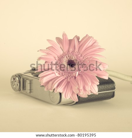 Flower and old camera - stock photo