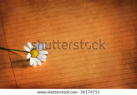 flower and paper grungy - stock photo