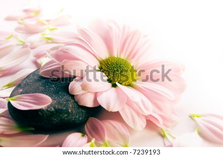 Flower and petals on a stone - stock photo