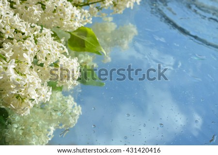 Flower and reflection in pure water, lilac - stock photo